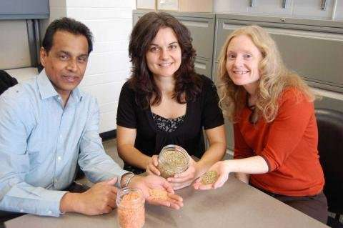 Lentils significantly reduce blood glucose levels, U of G study reveals