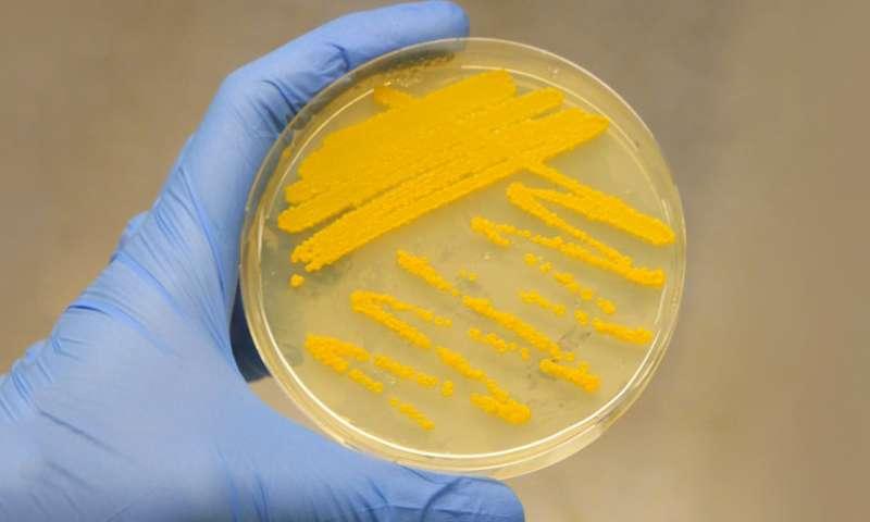 Leveraging the power of CRISPR-Cas9 to awaken antibiotics from their silent gene clusters