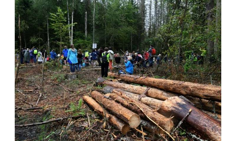 Logging in the Bialowieza Forest began in May 2016 but the European Commission took Poland to court last year arguing that it wa