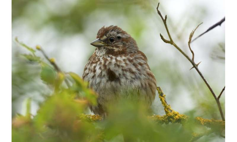 Long-term study reveals fluctuations in birds' nesting success