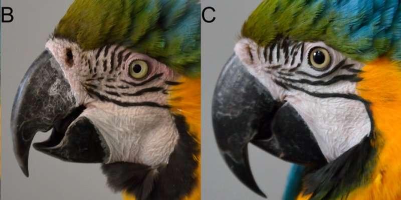 Macaws may communicate visually with blushing, ruffled feathers