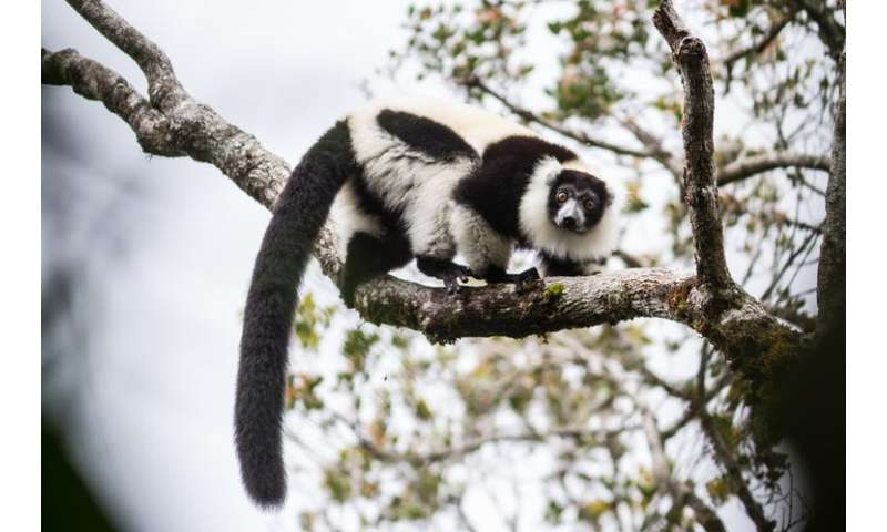 Madagascar: fear and violence making rainforest conservation more challenging than ever