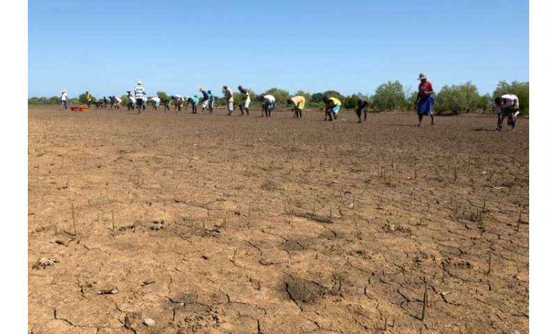 Madagascar, which hosts about two percent of the world's mangroves, has lost a fifth of them between 1990 and 2010, a study foun