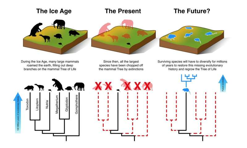 Mammals cannot evolve fast enough to escape current extinction crisis