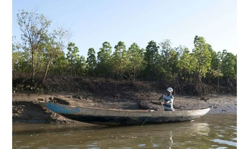 Mangrove forests, like this  one in western Madagascar, are disappearing at a rate of up to two percent per year