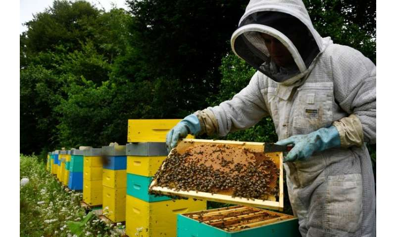 Many French beekeepers have seen hives mysteriously die off, which scientists believe is due in part to neonicotinoid pesticides