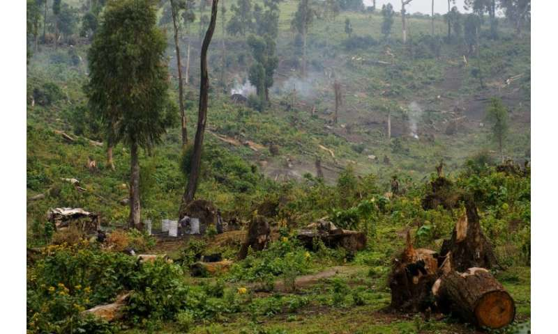 Many people in the Democratic Republic of Congo rely on rapidly dwindling woodland for their livelihoods