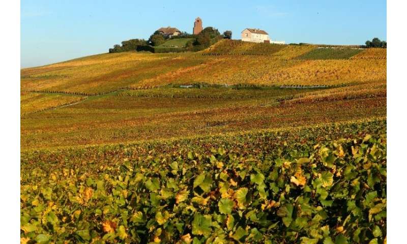 Many smaller French champagne producers are struggling to cope with softening sales in their home market