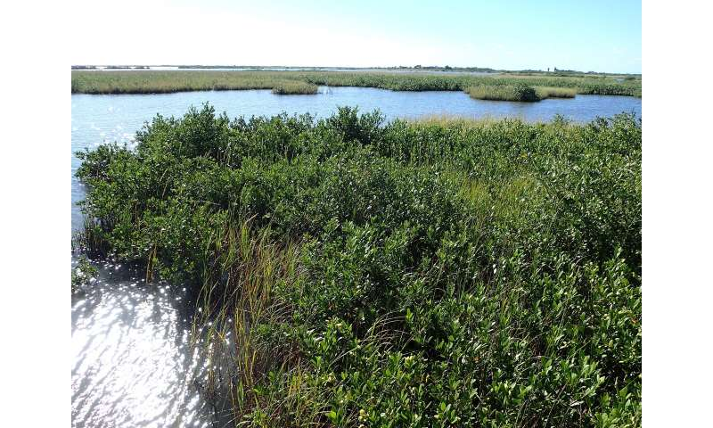 Mapping blue carbon in mangroves worldwide