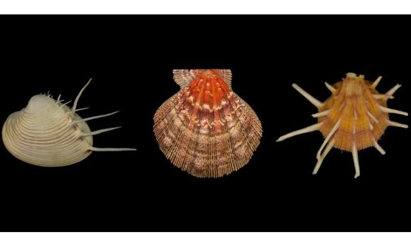 Mass extinctions remove species but not ecological variety