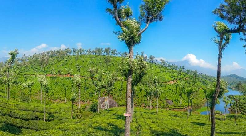 Massive need for growing trees on farms