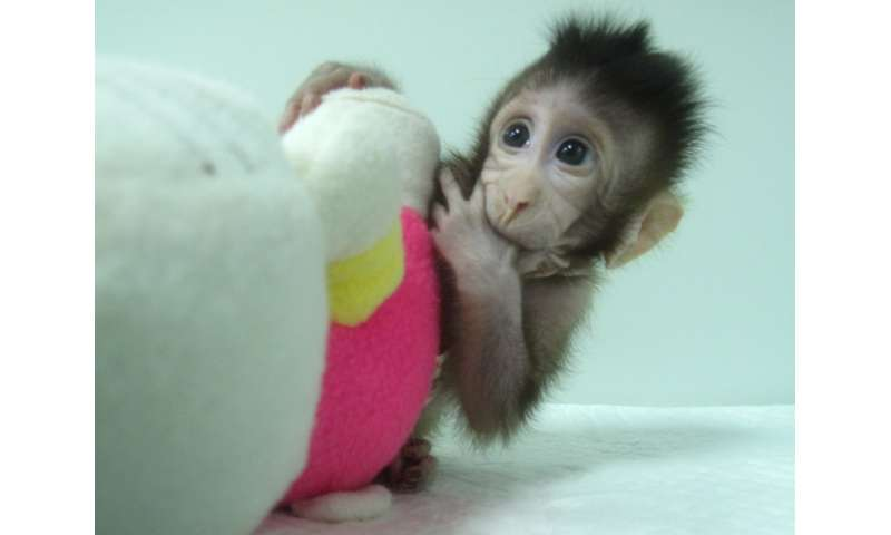 Meet Zhong Zhong and Hua Hua, the first monkey clones produced by method that made Dolly