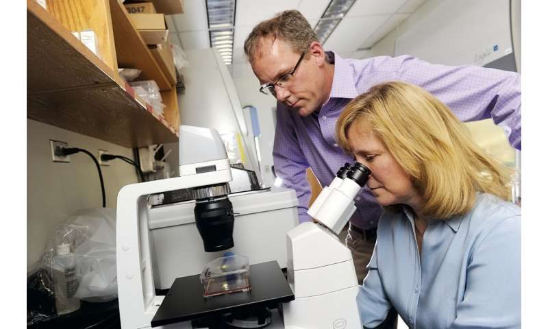 Memory B cells in the lung may be important for more effective influenza vaccinations