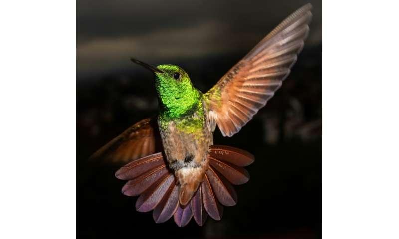 Mexico City has 17 of the world's 330 hummingbird species