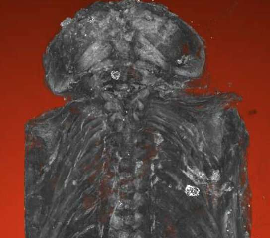 Micro-CT scans show 2,100-year-old 'hawk' mummy a stillborn baby