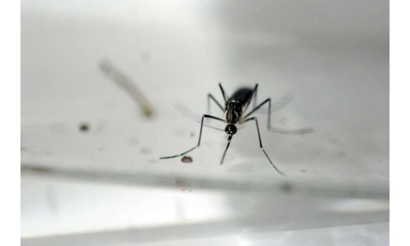 Millions of sterile male Aedes Aegypti mosquitos were released into the wild, where they mated with females who laid eggs that d