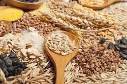 Minor cereals offer major promise for organic farming