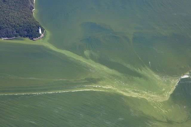 Mobile device could make it easier to predict and control harmful algal blooms