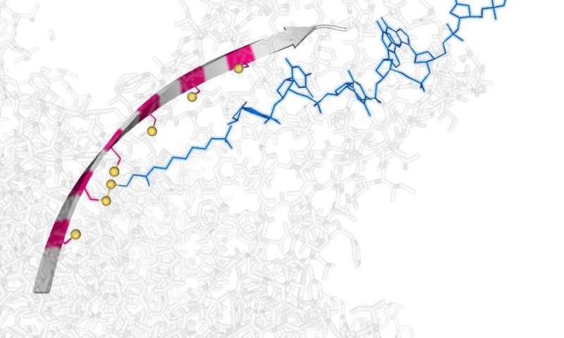'Molecular hopper' small enough to move single DNA strands