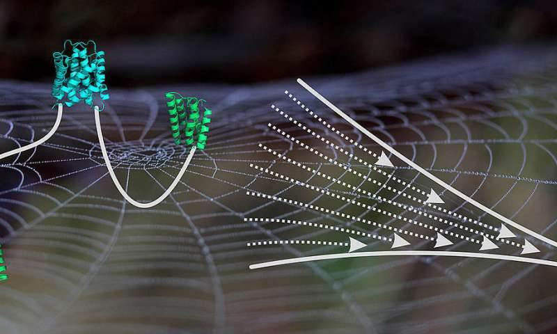 Molecular insights into spider silk