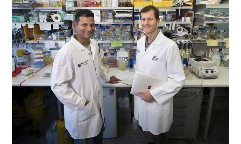 Monash discovery uncovers clue to disarm gonorrhea superbug