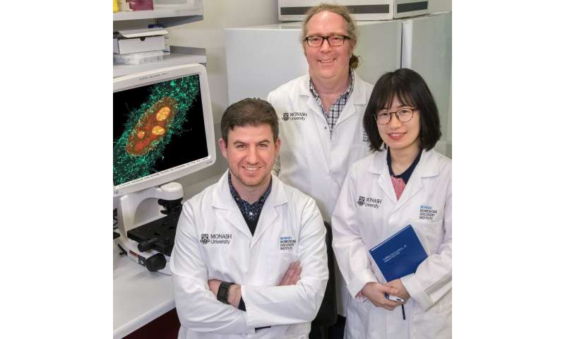 Monash scientists show that highly lethal viruses hijack cellular defences against cancer