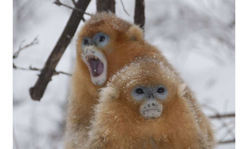 Monkeys eat fats and carbs to keep warm