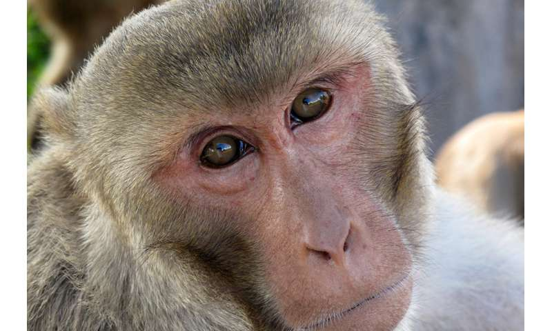 Monkey studies reveal possible origin of human speech