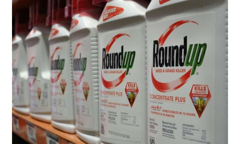 Monsanto could face massive losses if lawyers show in court that Monsanto's herbicide Roundup caused a groundskeeper's lethal ca