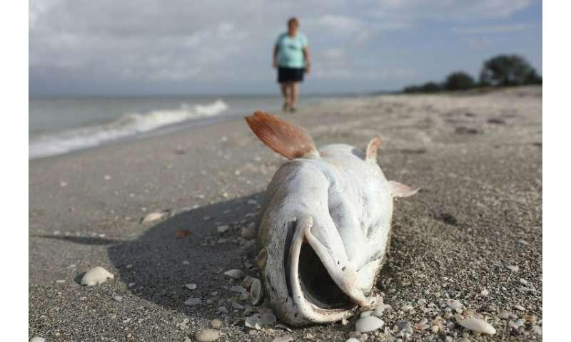 Devastating Dolphin Loss In Florida Red Tide Disaster