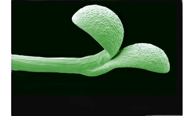 Mother knows best -- how plants help offspring by passing on seasonal clues