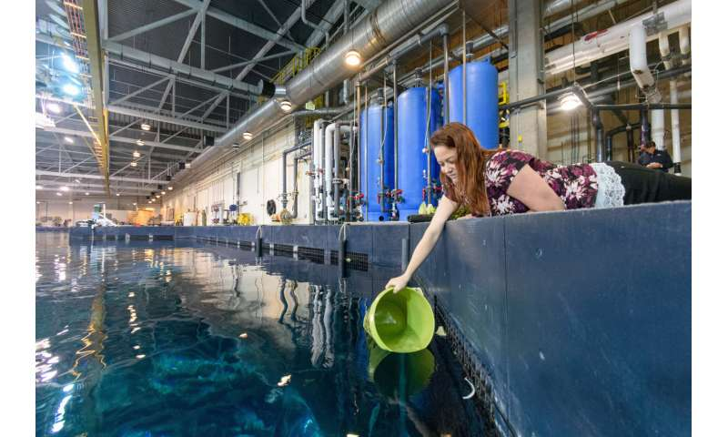 Motley crews of bacteria cleanse water at huge oceanic Georgia Aquarium exhibit