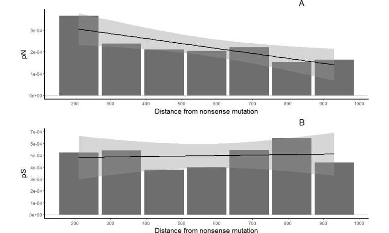 MSU-based bioinformaticians studied the evolution of broken genes in a fruit fly