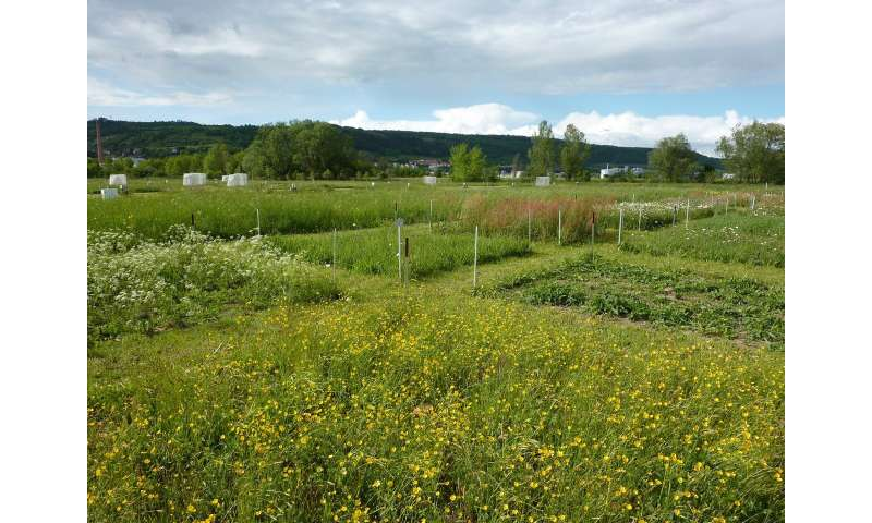 Multiple facets of biodiversity reduce variability of grassland biomass production