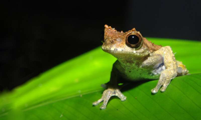 Named after Stanley Kubrick, a new species of frog is a 'clockwork orange' of nature