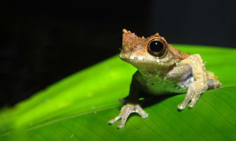 Named after Stanley Kubrick, a new species of frog is a 'clockwork orange' of nature