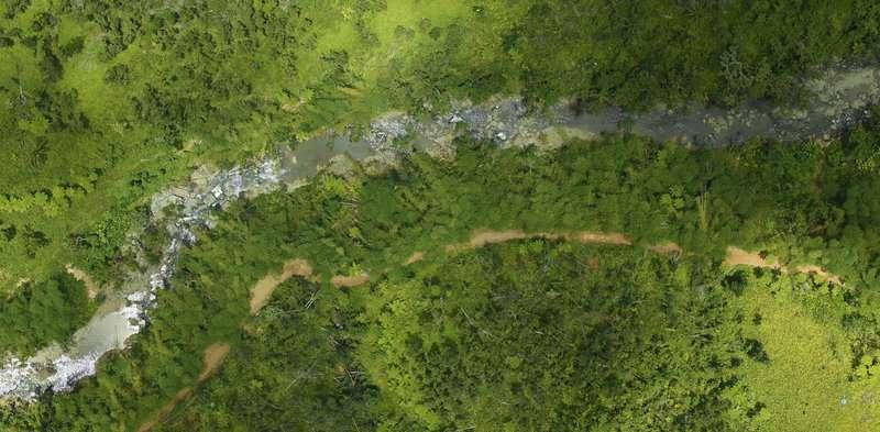 NASA surveys hurricane damage to Puerto Rico's forests