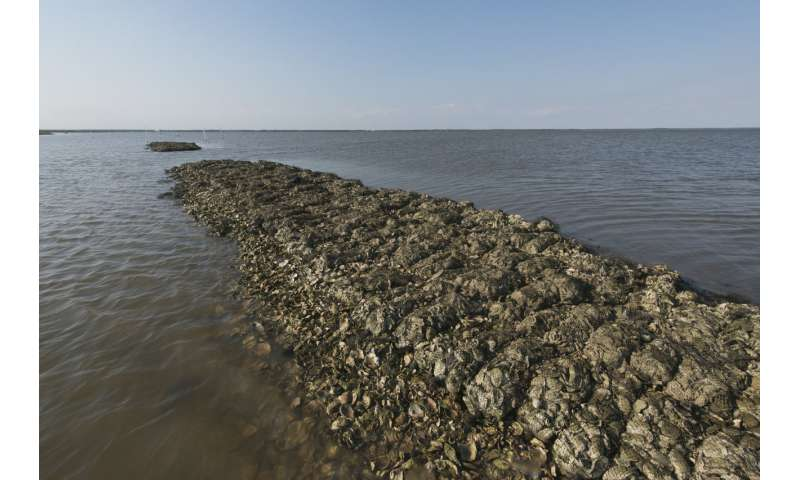 Nature-based solutions can prevent $50 billion in Gulf Coast flood damages