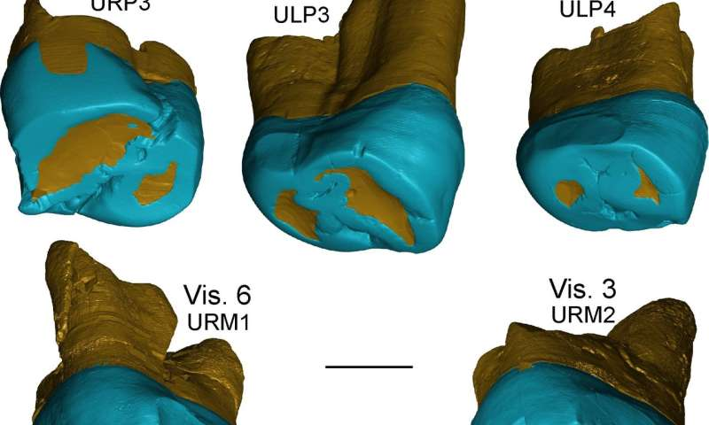 Neanderthal-like features in 450,000-year-old fossil teeth from the Italian Peninsula