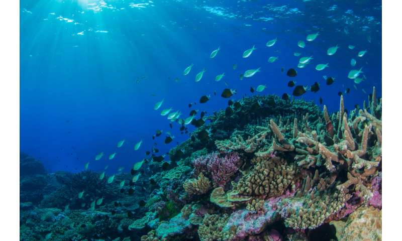 NE Australian marine heatwave shakes up coral reef animal populations