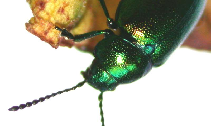 Neither smooth nor rough – Novel bio-inspired surfaces make insects slip