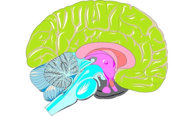 [Image: neocortex.jpg]