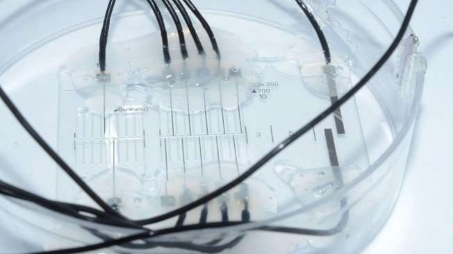 Nerve-on-a-chip platform makes neuroprosthetics more effective