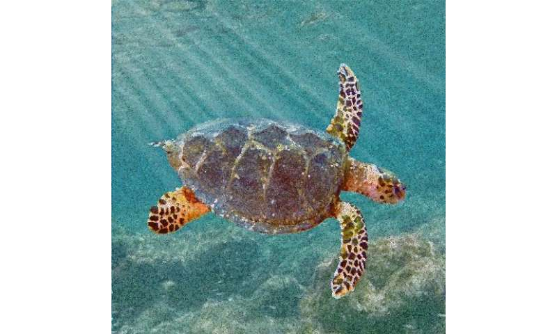 New ancestor of modern sea turtles found in Alabama