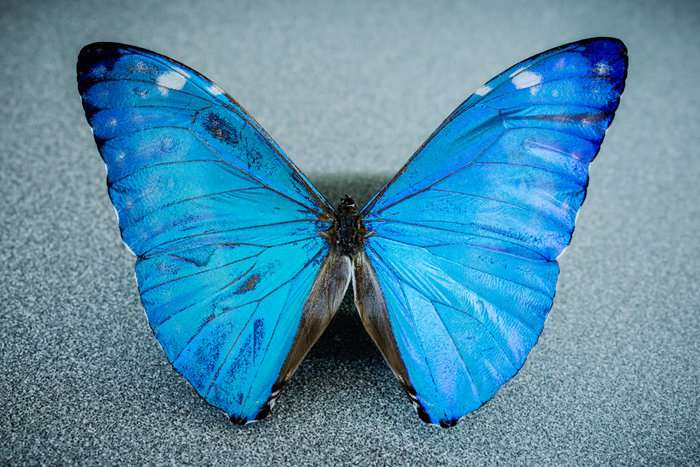New camera gives surgeons a butterfly's-eye view of cancer