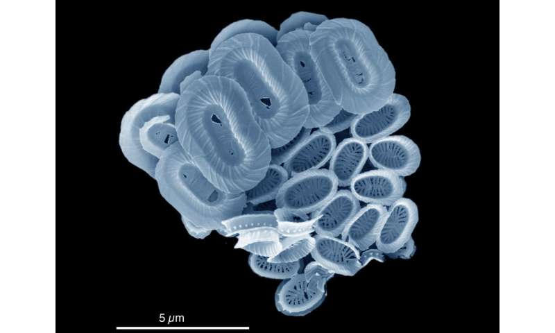 New ocean plankton species named after BBC Blue Planet
