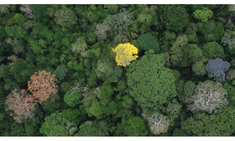 New study answers old questions about why tropical forests are so ecologically diverse