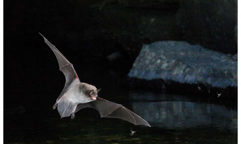 New study may provide clues to how birds began to fly