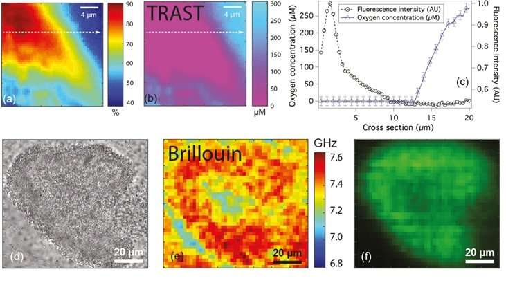 New tools to characterise physical properties of biofilms