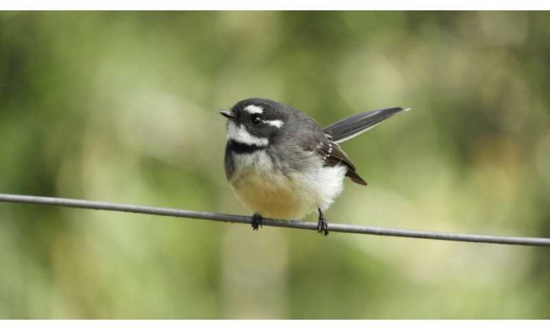 New use of limited data helps prevent species loss